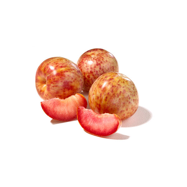 Dapple Dandy PLUMS